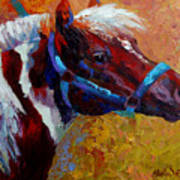 Pony Boy Poster