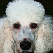 Poodle Art - Noodles Poster by Sharon Cummings