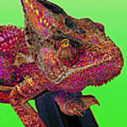 Pop Art Chameleon Poster
