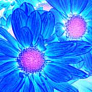 Pop Art Daisies 6 Poster