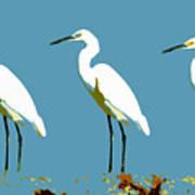 Pop Egrets Poster