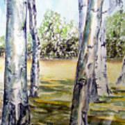 Poplar Tree   Poster