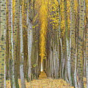 Poplar Tree Farm In Boardman Oregon In Fall Closeup Poster