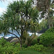 Poponi Maui Hawaii Poster