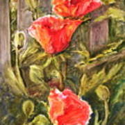 Poppies By The Fence Poster
