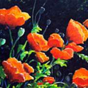 Poppies In The Light Poster