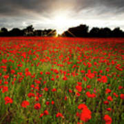 Poppy Field At Sunset Poster