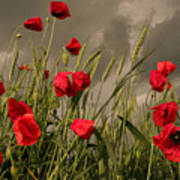 Poppy Field Before The Storm Poster