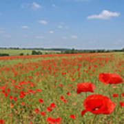 Poppy Fields 1 Poster