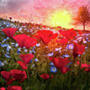 Poppy Fields At Dawn Poster
