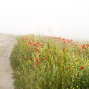 Poppy flower guarding the road Poster
