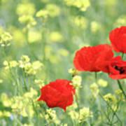 Poppy Flowers Spring Scene Poster