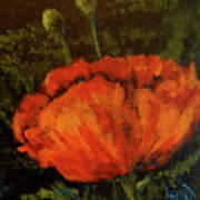 Poppy IIi Poster
