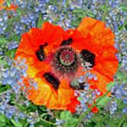 Poppy In Blue Poster