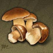 Porcini Mushrooms Poster by Marshall Robinson