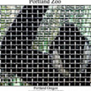 Portland Zoo Poster