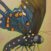 Portrait Of A Butterfly Poster