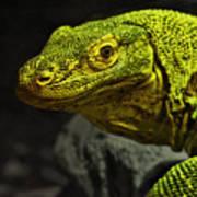Portrait Of A Komodo Dragon Poster