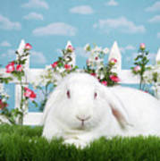 Portrait Of An Albino Lop Poster