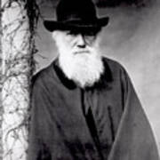 Portrait Of Charles Darwin Poster