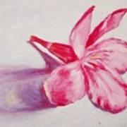 Portrait Of The Kaneri Flower. Oleander Poster