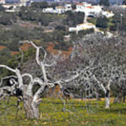 Portuguese Almond Plantation Poster