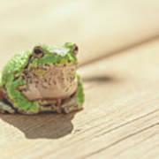 Posing Tree Frog Poster