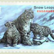 Postage Stamp - Snow Leopard By Kaye Menner Poster