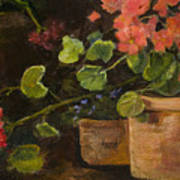 Pots Of Geraniums Poster