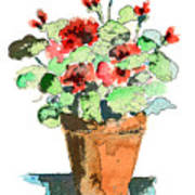 Potted Geraniums Poster