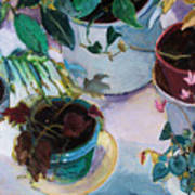 Potted Plants Poster by Diane Ursin