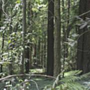 pr 138 - Frolicking Trees Poster