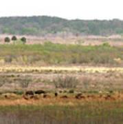 Prairie Bison Poster