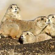 Prairie Dog Family Portrait Poster