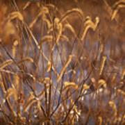 Prairie Grass Blades Poster