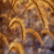 Prairie Grass Detail Poster