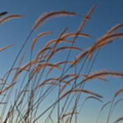 Prairie Grass Landscape Poster