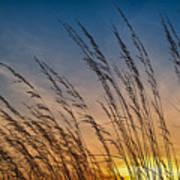 Prairie Grass Sunset Poster