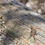 Prairie Lizard _ 1a Poster