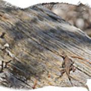 Prairie Lizard _ 1b Poster