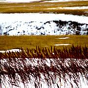 Prairie Winter Poster