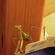 Praying Mantis II Poster