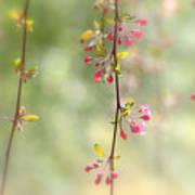 Pre Blossoms Poster