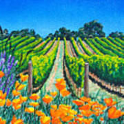 Presidio Vineyard Poster