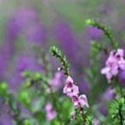 Pretty In Pink N Purple Poster
