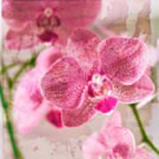 Pretty In Pink Poster by Pamela Ellis