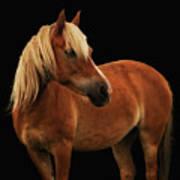 Pretty Palomino Pony Poster