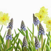 Pretty Spring Flowers All In A Row Poster
