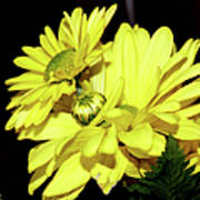 Pretty Yellow Flowers Poster