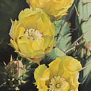 Prickle Pear Cactus Flower Trio Poster